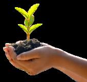 Hände mit Erde und junger Pflanze